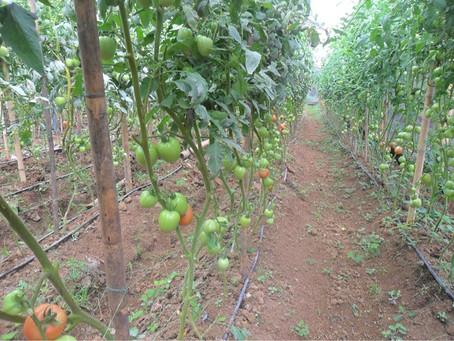 QUE SON LAS SALES en la agricultura resiliente