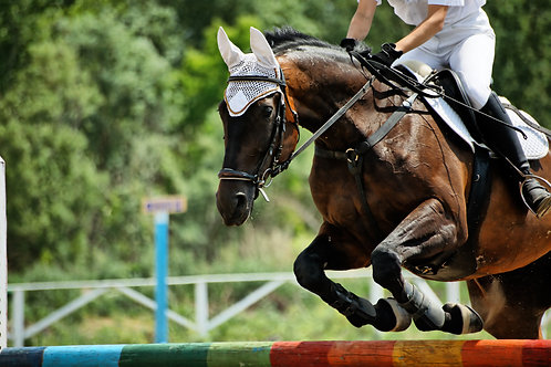 Equine Performance Package (5 Sessions)