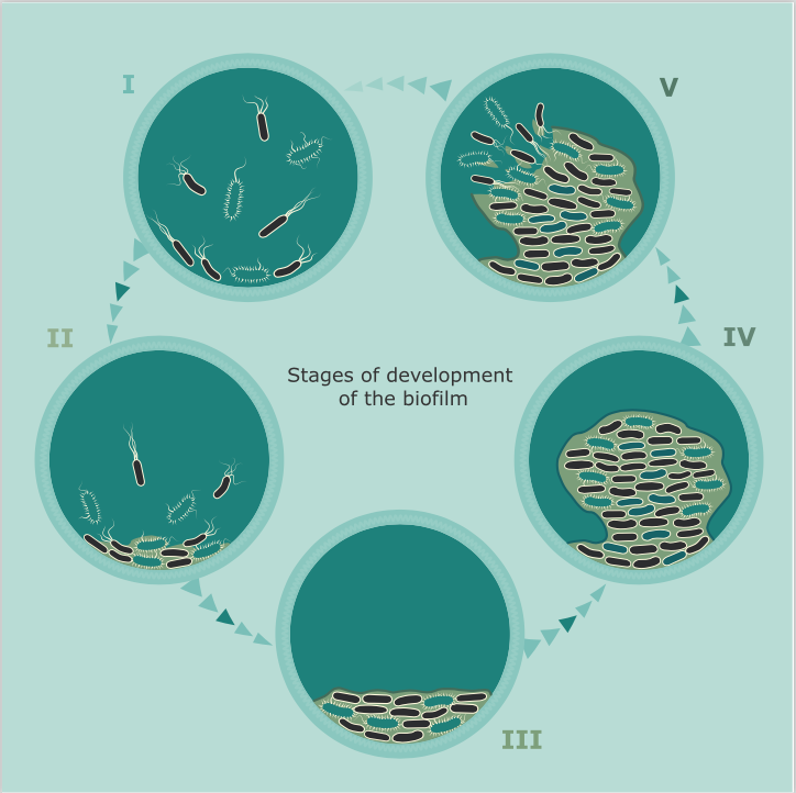 Five Stages of Biofilm Development