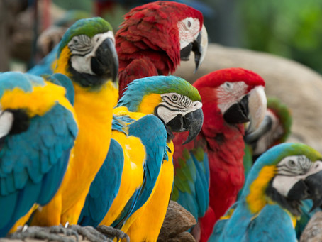 Mycobacterium Infections and Your Exotic Bird: How to Detect Avian Tuberculosis