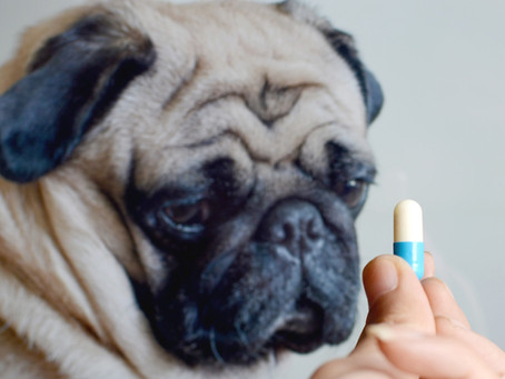 Biofilm Formation and Antibiotic Resistance: Common Chronic Infections In Pets