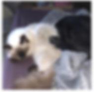 ragdollcatdog.jpg