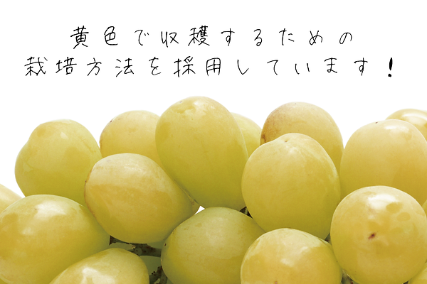 Setsumei_Saibaihouhou.png