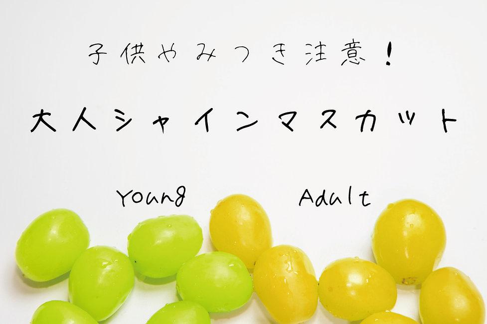 TOP_00_0519_3.jpg