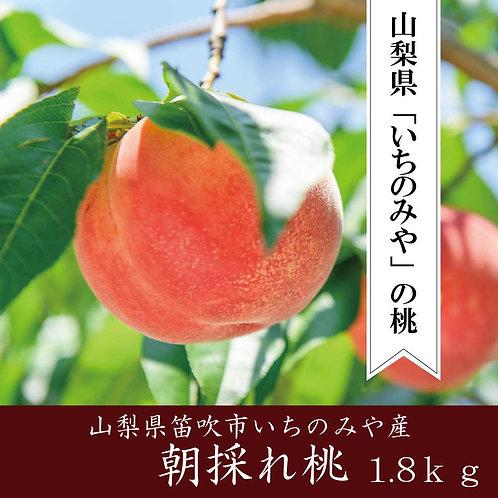 山梨県産【朝採れ桃】(標準グレード桃6玉 1.8kg以上)