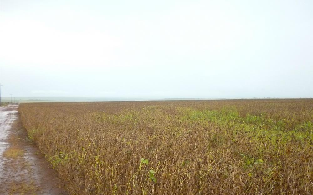 ControlSoft Notícias: Anvisa proíbe comercialização de herbicida associado à doença de Parkinson