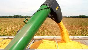 ControlSoft Notícias: Setor aposta em usina de etanol para fortalecer preço do milho