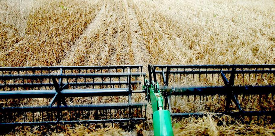 Produtores rurais garantem ao Tocantins condição de propulsor do crescimento agrícola