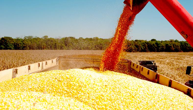 ControlSoft Notícias: Preço do milho atinge o maior valor em 6 meses - Foto: Mayke Toscano