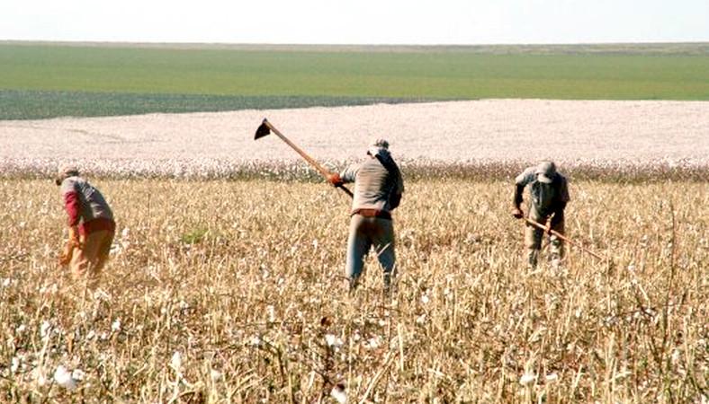 ControlSoft Notícias: Famato considera a Reforma Trabalhista um avanço para o setor rural