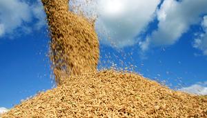 ControlSoft Notícias: México abre mercado para arroz brasileiro