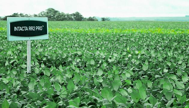 ControlSoft Notícias: Urgente! Aprosoja-MT pede fim da patente da soja Intacta à Justiça Federal
