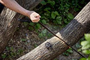 Sawing a tree close-up. Hand of a man wi
