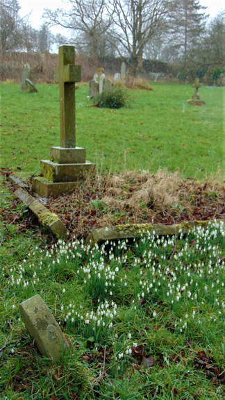 Welsh Newton, spring snowdrops.PNG