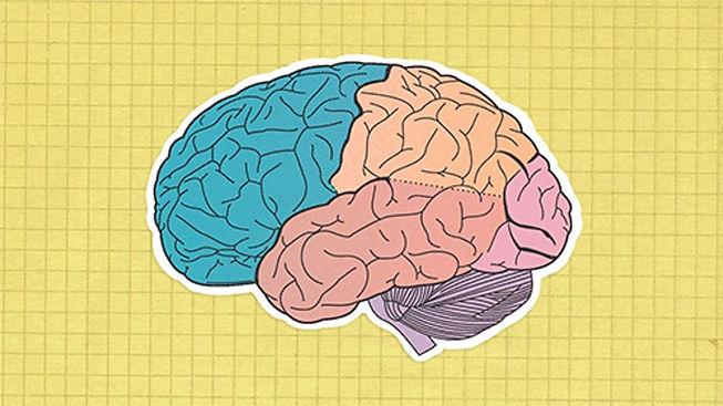 מוח.jpg