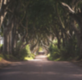 Dark Hedges.jpg