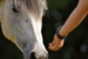 horse-2758813_1920.jpg