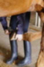 horse-719518_1920.jpg