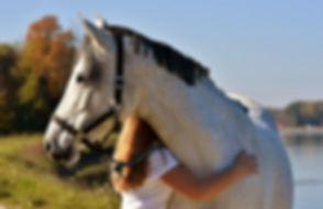 horse-2858776_1920.jpg
