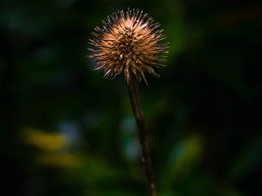 Jenkins Arboratum