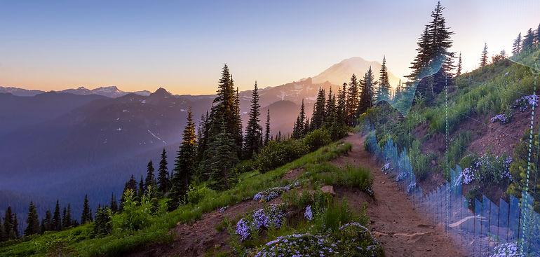 MountainPath_Flowers_Metrics.jpg