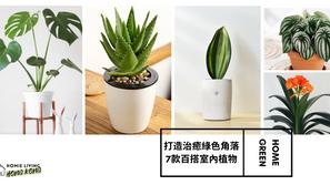 打造治癒綠色角落 7款文青系百搭室內植物推介