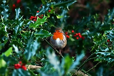 Christmas 2 - LowR.JPG