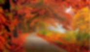 maple tunnel.png