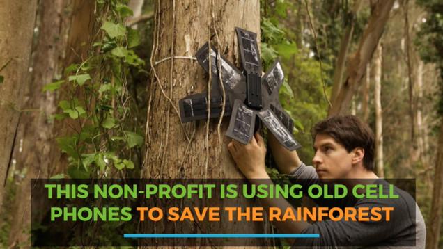 The Rainforest Connection