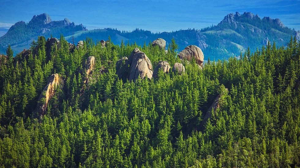 habitats_hero_temperate forest.jpg