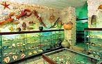 One of the European most valuable collection of shells and marine snails...