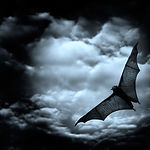 picada Bat