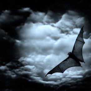 Morcegos: a convivência humana com os (únicos) mamíferos voadores