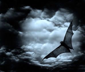 Bat élancées