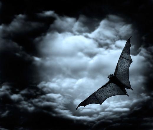 Swooping Bat