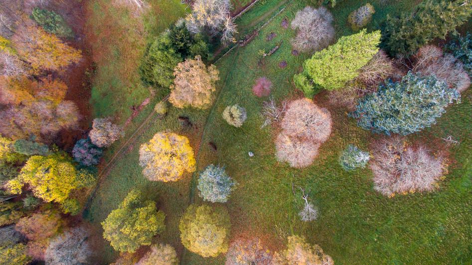 Autumn Woods, Peebles, Scottish Borders
