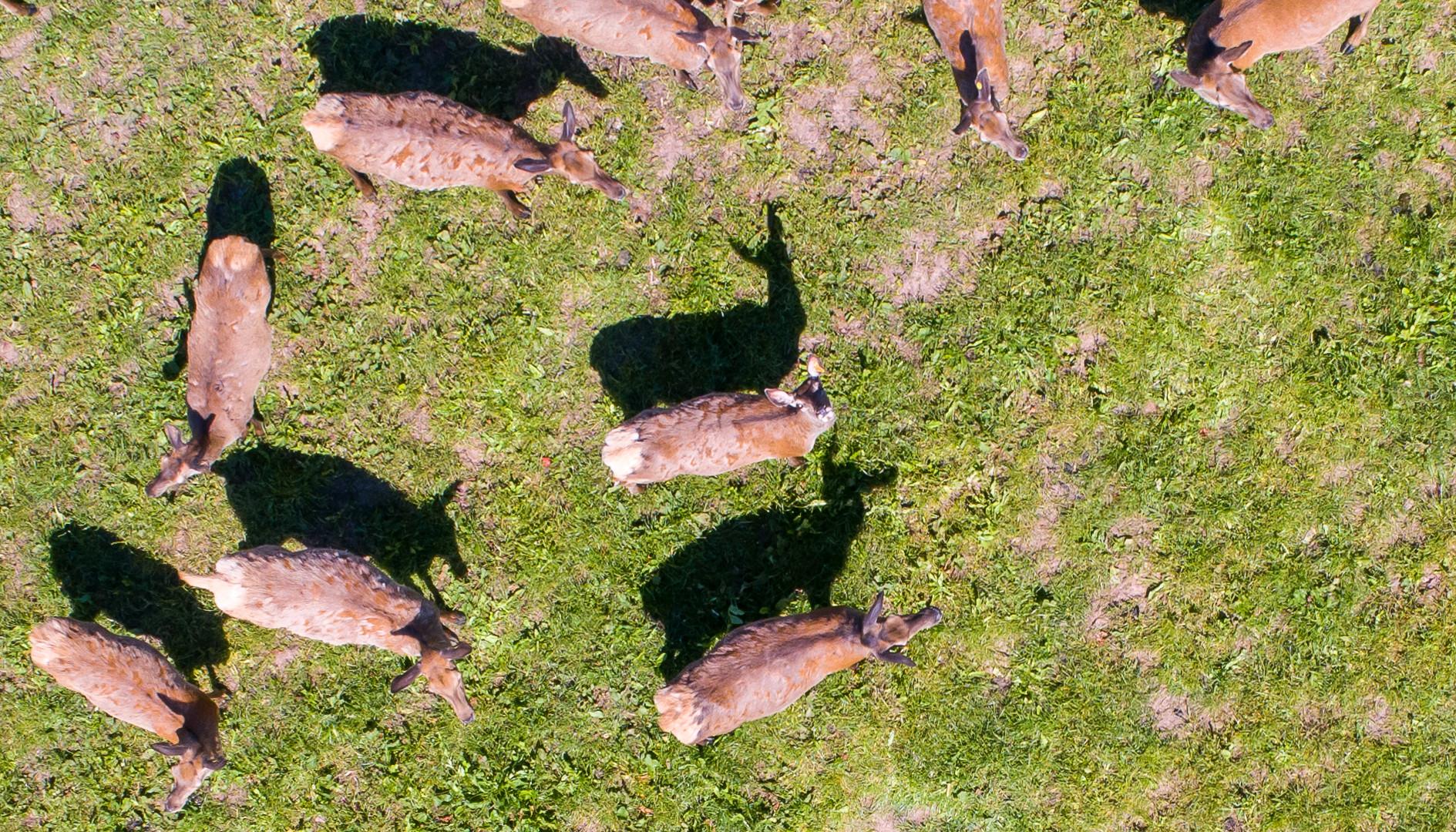 Sunny Bedrule Deer Observation