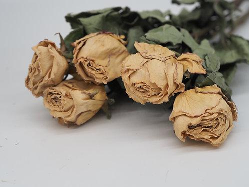 Getrocknete Rosen creme, 1 Bund