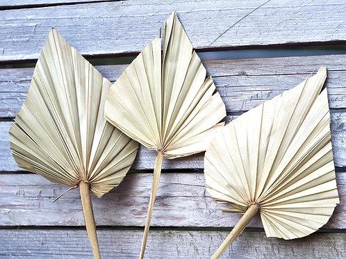Palm Spear Natur 5 Stück