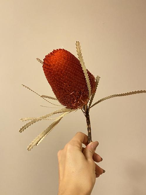 Banksia rot / 1 Stück
