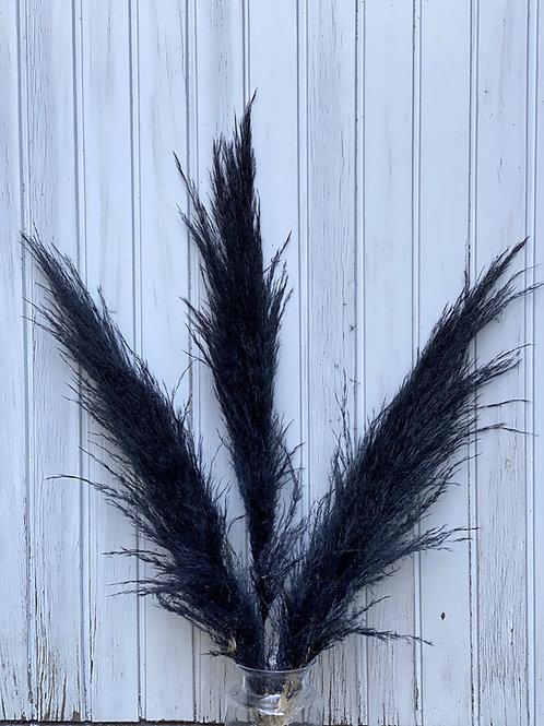 Pampasgras fluffig schwarz 1 Wedel