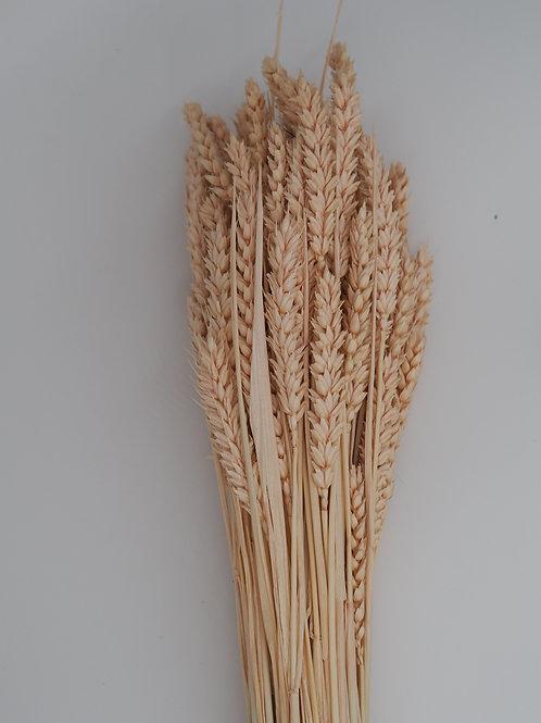 Weizen rosé / 1 Bund