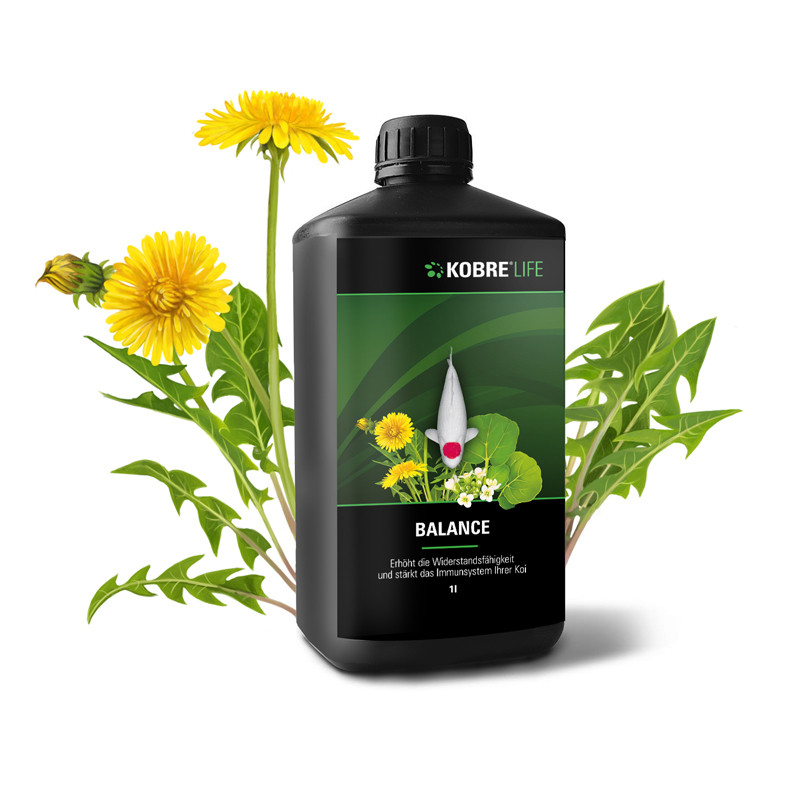 Botanical Packaging Illustrations dandelion löwenzahn