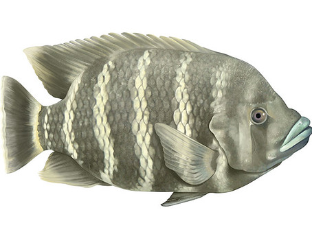 Fisch Illustrationen