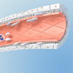 Illustration of a sinusoid vessel