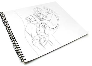 Medizinische Illustration Medical illustration pregnancy