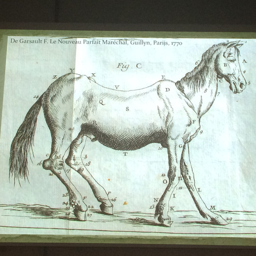 From the lecture on Veterinary Medicine as a Visual Science in 18th-Century in France