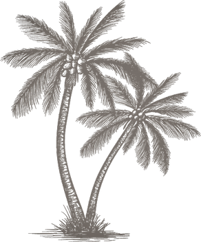 palm%252520tree_edited_edited_edited.png