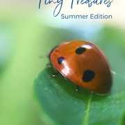 In Search of Tiny Treasures (Summer Edition)
