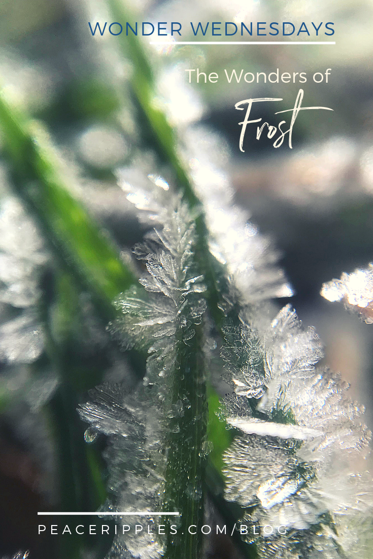 Awe-inspiring macro photography of winter frost and ice crystals in nature